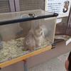 動物との距離が近いアットホームな動物園「須坂市動物園」