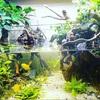 お魚に優しい水の作り方…水槽やビオトープ立ち上げの際に知っておきたい事…