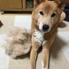 抜け毛の季節