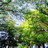 【皐月・5月のお誘いです】天宮光啓先生 瞑想会 法話会 四国遍路 仏教