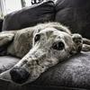 寝たきり老犬のシャンプーや介護