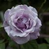春の花が終わり・・ひと休みの庭