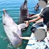 【津久見市】うみたまごの年パスで入場無料!イルカと遊び尽くせる超体験型施設『つくみイルカ島』