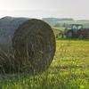 ずしんと大きな牧草ロール