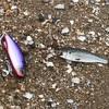 2020/6/28  釣行記 弱雨後ホームリバー&浜、イナッコボイルにまた完敗