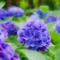 雨待つ花の想い咲く 想いの数だけ色鮮やかに
