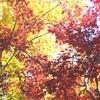 秋晴れの日。