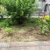 庭に苗木を植えました🌴