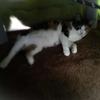 【愛猫日記】毎日アンヌさん#230