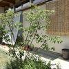 遮光ネットと夏の庭