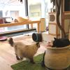 猫カフェに行きました