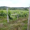 道産ワインの新たな境地を開拓するつつましやかな御夫婦〜中澤農園(Nakazawa Vineyard)さん訪問