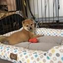 komugi222のブログ