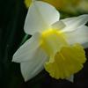 5月、庭の花