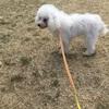 【新横浜】レンタル犬とお散歩を満喫。1時間500円は安い!