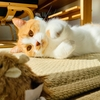 愛猫のお気に入りのおもちゃほど、憂き目に遭います…