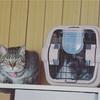 2週間の保護期間が過ぎたので警察から電話があった ~石破紫蘭さん♀(猫)拾得物から家族へ~