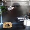 水槽の移動とフィルターの稼働