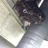 豊橋市で給湯器の下の蜂の巣を駆除してきました