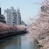 桜、あっという間に終わっちゃいましたね。
