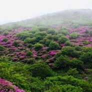 梅雨は華を鮮やかに、大分県 九重連山 久住山を弾丸登山。