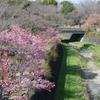 こんな時でも春が来た〜昭和記念公園はもう花盛り。