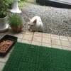 さくら猫サポートプロジェクト 白ちゃんさくら猫デビュー