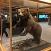 Alaska・Fairbanks短期旅行~極寒のオーロラ鑑賞~