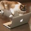 ブログ初心者がはてなブログProにするか悩んでいるなら絶対にするのをオススメする。