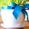 【DIY】植木鉢の色塗り