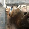 愛犬りょう 28