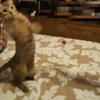 猫ブログ_よく立ちあがる猫 #オシキャット