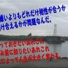 三重県波切港 ジギング、アオリイカ 産卵期シーズン到来