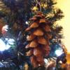 我が家初のクリスマスツリー