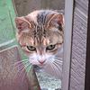 摩耶山と猫さん