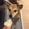 うちの犬は野菜が結構好きです。