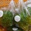 法人直営農園「あんず農園」では、低カリウムレタスを栽培しています
