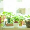 ずぼらでも観葉植物が欲しい!ウォールステッカーでお家に緑を取り入れる方法。