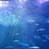 女二人で大満足! 名古屋港水族館が超楽しい