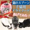 子猫用のドライフード【銀のスプーン】を子猫3兄弟にあげてみた!反応は!?【国産】