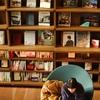 T-SITE枚方の美しすぎる本棚を眺めてきた