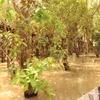 2017年8月17日(木) トンレサップ湖③【カンボジアひとり旅】#19