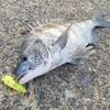 【釣行 9月26日】釣って食べるという楽しさ