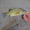 特に狙いを定めず釣りに出掛けた結果、虎狩りになってしまった小貝川釣行記