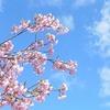 奈良の馬見丘陵公園南エリア。『春まちの丘』に 春がきました(^_^)
