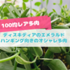 たにログ263 【ハンギング】初夏に成長するディスキディア・エメラルドの特徴と育て方!