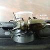 ミヤマクワガタの大きさで耳状突起の形を比較!