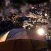 雨のなか桜を撮影!おすすめのカメラ用防水カバー「Shell」(ピークデザイン)