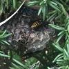 浜松市で草むらの中にできた蜂の巣の駆除してきました!