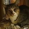 3-247   グレコ家猫日記〜神猫グレコのお話〜
